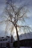 Tree Reala