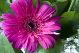 Flower 5D
