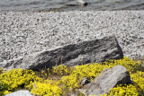 Rocks & flowers 5D