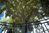Tree @f11 M8