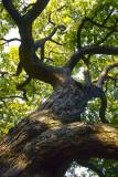 Tree trunk @f8 RDPIII