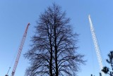 A tree and two cranes @f5.6 M8