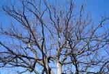 Tree @f8 M8