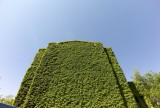 Building covered by vine @f8 M8