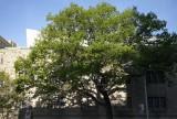 Tree @f5.6 M8