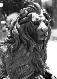 02 - Lion in Bonze
