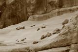Rock Gathering