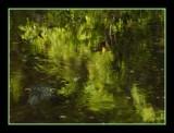Fall Reflections of Oak Creek