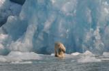 DSC_8755 ijsbeer.jpg