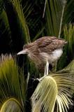 birds_heronchick