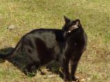 River The Black Cat
