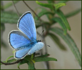 Insects, Amphibians, Reptiles and Flowers in Cyprus