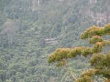 Blue Mts Rainforesta.jpg