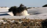 WHITE SANDS NATIONAL MONUMENT - GYPSUM PLANT SAND (2).JPG