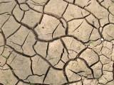POYANG LAKE NATURE RESERVE - POYANG LAKE, JIANGXI PROVINCE, CHINA (32).JPG