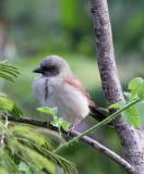 BIRD - SPECIES UNIDENTIFIED - RUHENGERI RWANDA 2012 (100).JPG