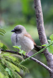 BIRD - SPECIES UNIDENTIFIED - RUHENGERI RWANDA 2012 (98).JPG