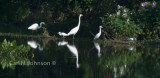 Egrets _4564-667.jpg