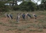 Vogels Afrika - Birds Africa