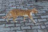 Kat in Side