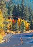 Fall Road_0309