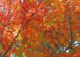 Orange_0654