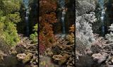 Three Seasons