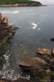 Newport Cove.jpg