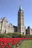 Ottawa, Ontario Tulip Festival 2008