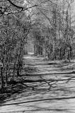 woods_path.jpg