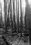 woods_sun.jpg