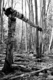 woods_broken.jpg
