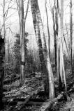 woods_light.jpg