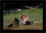A Teddy-Bear's Picnic