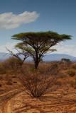 Landscape-IMG_0534.jpg