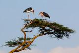Storks_0167.jpg