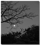 moon and tree...