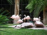 Inside the Flamingo Hotel