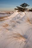 P-town dunes-8337.jpg