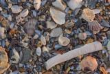 Chatham seashells_M7K2237.jpg