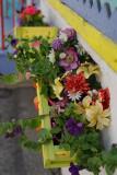V58 Flowers