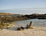 genovesa__darwin_bay_beach