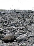 Bird Island, Strangford Lough