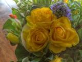 Roses jaunes.