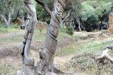 Algérie - Tipasa - ruines et sculptures (Essaheli Djelloul )