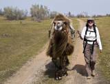 Assistant camel driver