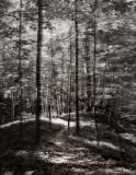 my blurry path