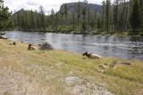 Yellowstone Sept. 2008