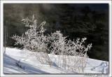 Cold Creek005 copy.jpg