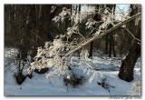 Cold Creek006 copy.jpg